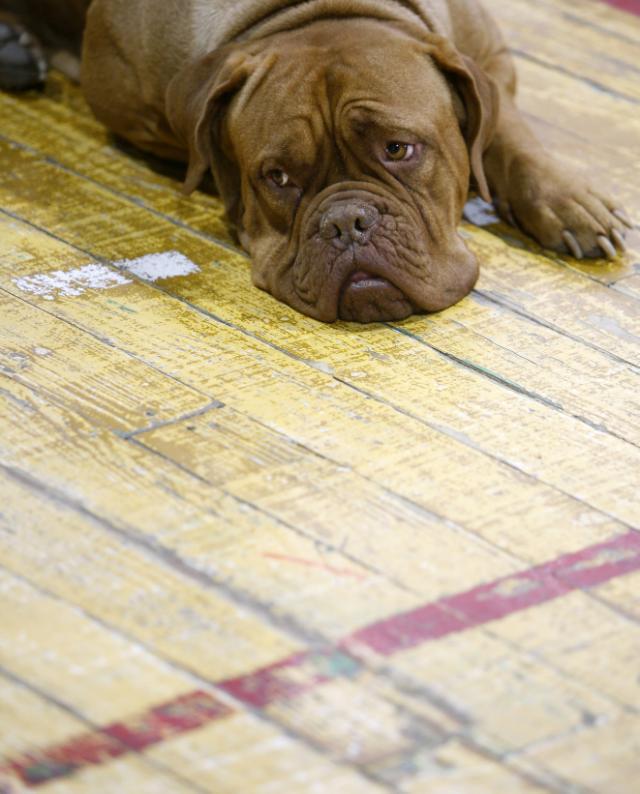 Rusi, qeni i braktisur udhëton 200 km për t'u kthyer te pronari.