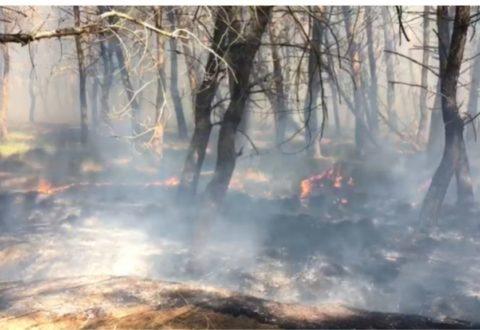 Zjarr në Zvërnec, rrezikohet pylli i Sodës